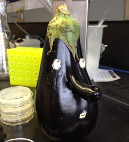 Mr.Eggplant whistling